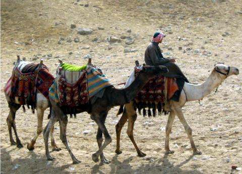 Аллах радуется покаянию Своего раба больше, чем путешественник нашедший верблюда с едой в пустыне